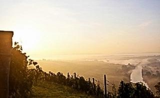 Vogelsburg - Sonnenaufgang